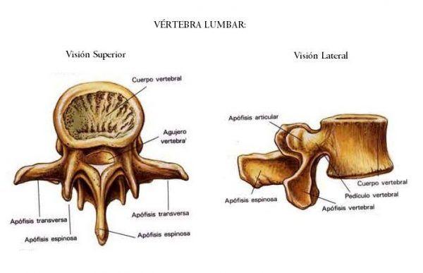 Vertebra Lumbar – Fisioterapia – Lesiones – Tratamientos – Cursos ...