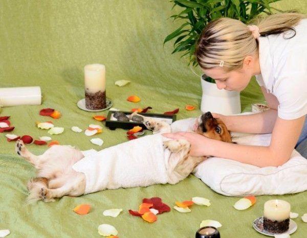 masajes a mascotas