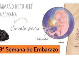 Decima Semana de Embarazo