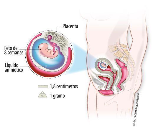 Semana 8 de Embarazo