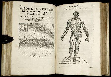 Sinopsis de anatomía humana | Anatomía