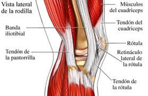 estructura de rodilla