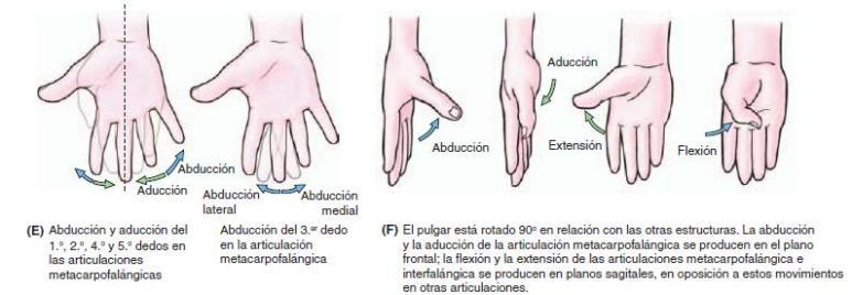 Movimientos de los dedos de la mano