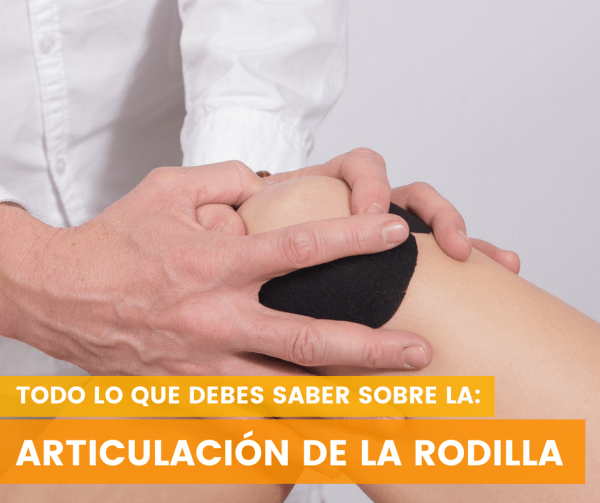 Articulación de la RODILLA | Anatomía