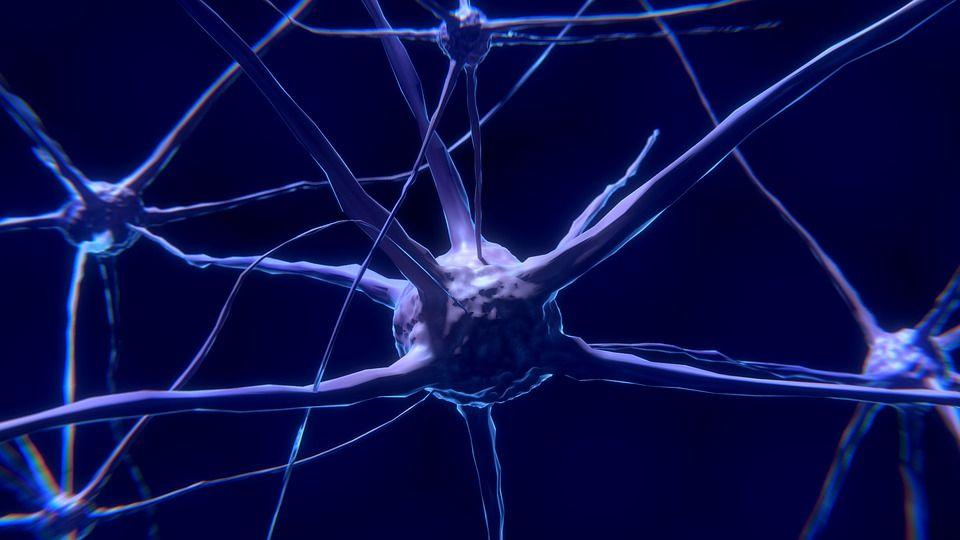 Las funciones del sistema nervioso